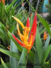 Flower-p1030403-01
