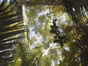 trees-looking-up-at-tree-canopy