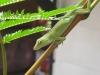 07b-img_76602-chameleon